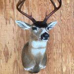 Deer Head Mount