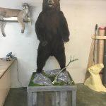 Taxidermy Bear